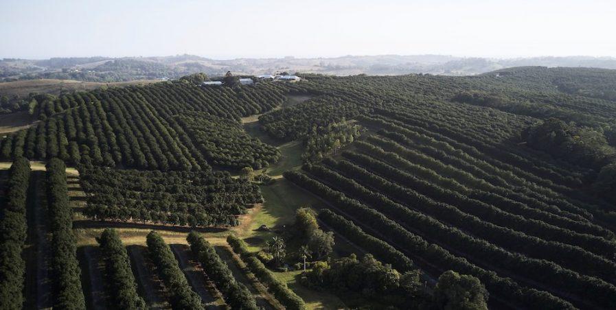 Australian macadamia orchards